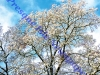 0917-snowy-trees