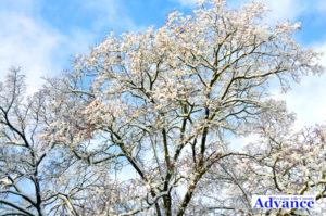 0917-jay's-tree