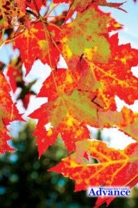 3817-leaves-lighter-4wide